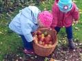 08-Apfelernte