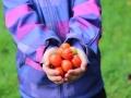10-Tomaten-in-Hand