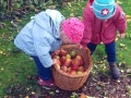 12-Apfelernte